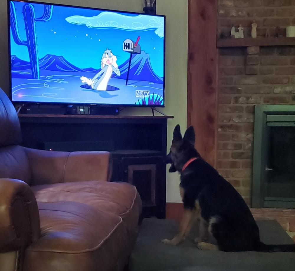Our puppy Mimzy loves watching Toon in With Me!!